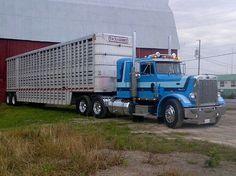Peterbilt classic 359 bull hauler