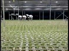 The DKG Group presents GRODAN hydroponics (Υδροπονία) - YouTube