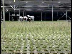 The DKG Group presents GRODAN hydroponics (Υδροπονία) - YouTube