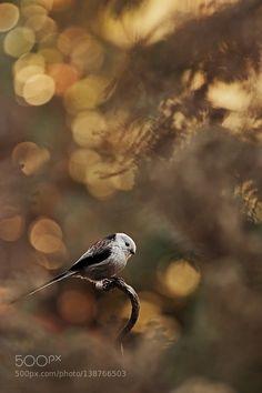http://ift.tt/1ZY8ZTJ #Nature breathtaking #Photos - by HenczJudit http://ift.tt/1P79pim