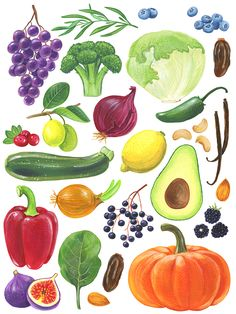 Fruit and vegetables on an abc poster Vegetable Illustration, Fruit Illustration, Food Illustrations, Watercolor Illustration, Watercolor Fruit, Watercolor Paintings, Fruit And Veg, Fruits And Vegetables, Vegetable Drawing
