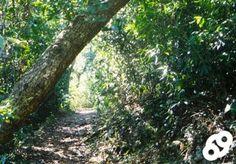 ¡Tenemos otra vez a nuestra bloguera invitada Pamy Rojas esta semana hablando de El Encanto de los Bosques!