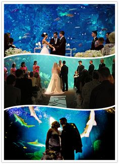 aquarium wedding - our ultimate dream never going to happen in a million years because it's so expensive! Would love to at least have some photos taken there!