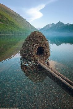 A beaver house ~ amazing symetryClick to check a cool blog!Source for the post: Click