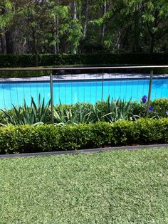 chrome Pool fence going through planting