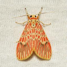 Footman Moth, China
