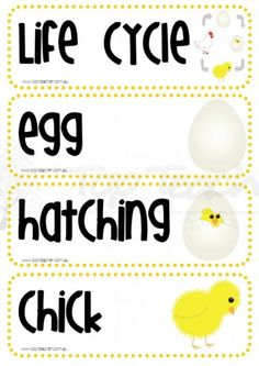 life cycle of a chicken theme word wall cards