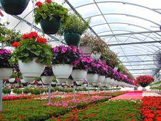 أكبر 10 دول في إنتاج الزهور | مدونة العالم العجيب