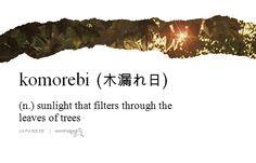 komorebi 木漏れ日