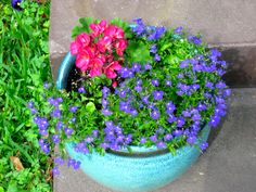 my favorite color combination for potted plants