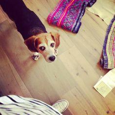 . Beagles, Floors, Interior Design, Dogs, Fun, Instagram, Home Tiles, Nest Design, Home Interior Design