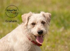 05/19/14 Graham #12832 Terrier Mix • Adult • Male • Medium City of Friendswood Animal Control Friendswood, TX