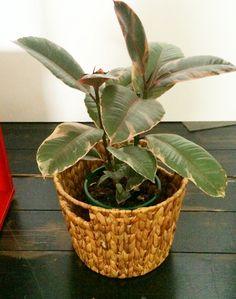Woven Basket & Indoor Plant