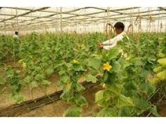 Revolutionising Indian farming - with Israeli technology   For More Details: http://www.agribazaar.co/index.php?page=item&id=2260