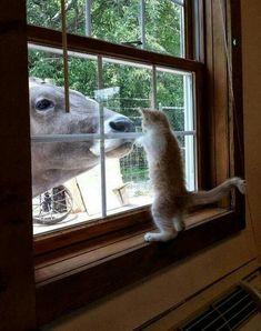 Você quer entrar, ou quer que eu saia?