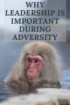 Why leadership is essential during adversity Leadership Development, Personal Development, Train Your Mind, Career Change, Career Advice, Self Improvement, Confident, Cloud, Acting