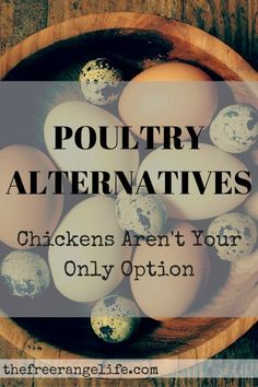 poultry alternatives chickens aren't the only option for poultry on your homestead