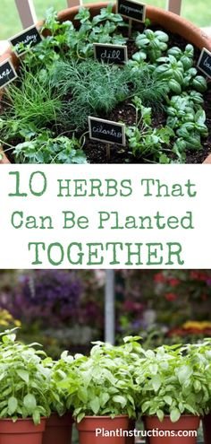 We've compiled a list of herbs that can be planted together so you don't have to keep guessing! These herbs thrive when planted together, not to mention that companion planting will also save you a ton of space! via tips vegetable companion planting Herbs Small Herb Gardens, Outdoor Gardens, Small Outdoor Herb Garden Ideas, Outdoor Plants, Balcony Herb Gardens, Small Vegetable Gardens, Vertical Gardens, Outdoor Spaces, Indoor Outdoor