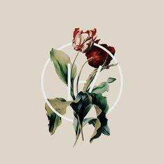 "durbanskie: """"A flower study + the Twenty One Pilots symbol. "" """