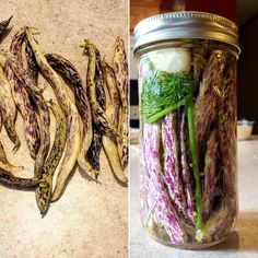 Pickled some dragon tongue beans. I think the color is amazing! Dragon Tongue Beans, Veggie Box, Bean Plant, Horticulture, Preserves, Pickles, Green Beans, Deer, Mason Jars