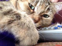 My Remote - http://cutecatshq.com/cats/my-remote/