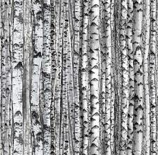 Landscape Medley White Birch Trees Rows of Tree Trunks Cotton Fabric Fat Quarter Landscape Fabric, Forest Landscape, Graphic Pattern, Graphic Design, White Birch Trees, Woodland Fabric, Aqua, Timeless Treasures Fabric, Aspen Trees