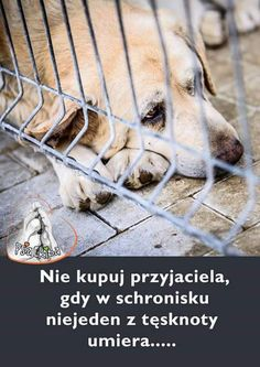 (1) Twitter Happy Photos, True Stories, Peace And Love, Bff, Dogs, Education, Twitter, Animales, Quotes