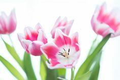 'Tulpen 2' von miendienche bei artflakes.com als Poster oder Kunstdruck $20.79