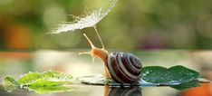 Magical World Of Snails Captured In Macro Photography By Vyacheslav Mishchenko