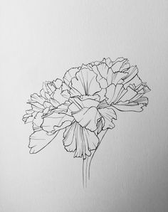 Floral line drawing by Carvel