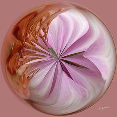 Amazing Circle - Lotus.  Copyright Nancy Kirkpatrick Photography