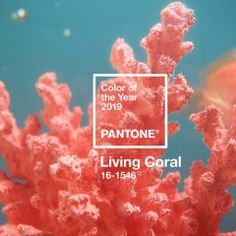 Living Coral is the 2019 Pantone Color of the Year. The coral hue with gold-undertones is sure to spark design trends across fashion, product design, and home furnishings. Coral Pantone, Pantone Color, Web Design, Logo Design, Graphic Design, Social Media Plattformen, Clem, Coral Design, Life Affirming
