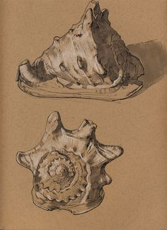 花瓣网-der Peet : Insects by Floris van der Peet on ArtStation. Art Sketches, Art Drawings, Shell Drawing, Gcse Art Sketchbook, Sea Life Art, Architecture Concept Drawings, Observational Drawing, Toned Paper, Paper Drawing