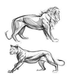 lion studies / by christian bian