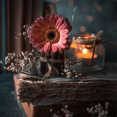 Heart Wallpaper Hd, Friends Wallpaper, Cute Wallpaper Backgrounds, Flower Wallpaper, Book Flowers, Night Flowers, Real Flowers, Beautiful Good Night Images, Christmas Scenery