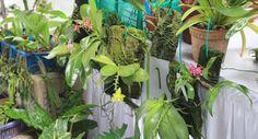 21pp_gardening3_JP_1591074g.jpg (630×341)