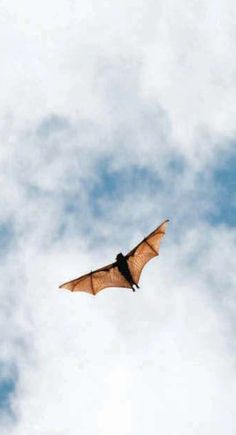 Bat #junkydotcom sky animal