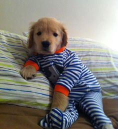 Puppies in pajamas. My new favorite thing...