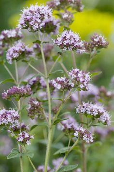 Vase, Plants, Horoscope, Flower Vases, Flora, Plant, Jars, Vases, Planting