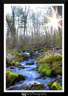 fresh spring by Whurrledpeas on deviantART