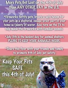 More pets get lost on of July than any other day in the U. Please heed these safety tips to keep your pet safe sound so that everyone has an enjoyable holiday! Happy 4 Of July, 4th Of July, Veterinary World, Veterinary Medicine, 1. Tag, Safe Haven, Pet Safe, Find Pets, Pet Memorials