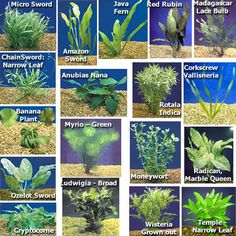 Aquatic Plants for Freshwater Aquariums: Aquarium Plant Pack - Ultimate