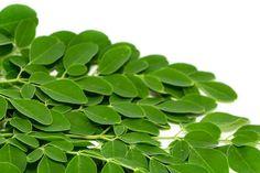 Moringa Oleifera . Baum des Lebens  Der Moringa Baum stammt ursprünglich aus der Himalaya-Region in Nordwestindien. Bereits vor 5000 Jahren kannten die Menschen dort seine Eigenschaften. Heute kennen auch wir ihn endlich – den Baum des Lebens.
