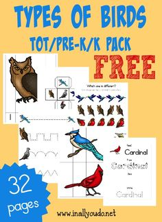 Your little ones will enjoy learning more about different types of birds with this fun Types of Birds Tot Pack!! 32 pages :: www.inallyoudo.net