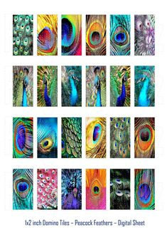 1x2 inch Domino Tiles Peacock Feathers Digital by RidgebackOz