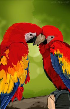 The Scarlet Macaw has been reintroduced into the rainforest of the Gulf of Mexico after being wiped out there 50 years ago due to habitat destruction and exploitation for the pet trade. In 2014, 27 macaws were released into the Biosphere Reserve in S Veracruz - 1st step in an effort to restore their population there. In addition, info about these birds will be provided in the areas @ the rainforest with hopes that their presence will now be appreciated, respected and protected.