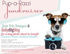 Join dailydogblog and Iris Images in a fun-filled day of pet photography benefiting Forever Paws Animal Shelter! Saturday, September 8th at Buttonwood Park in New Bedford, MA from 1-3pm.