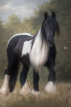 Photographer Captures the Awesome Power of Draft Horses in Her Dramatic Equine Action Shots Nut Up, Draft Horses, Art Photography, Fancy, Animals, Puppies, Fine Art Photography, Animales, Cubs
