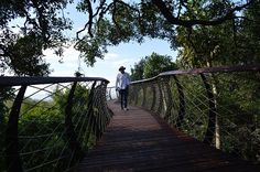 Named the 'Boomslang' after the arboreal snake indigenous to South Africa, this 130m canopy walkway in the Kirstenbosch National Botanical Garden in Cape Town is its newest, and most striking, attraction.