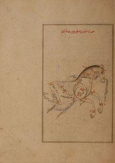 Pegasus (al-faras). (Constellations of the northern hemisphere). Kitab suwar al-kawakib al-thabita (Book of the Images of the Fixed Stars) of al-Sufi